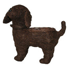 Dark Brushwood Standing Dog