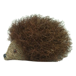 Brushwood Hedgehog
